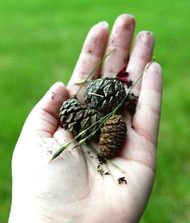 hand-of-nature.jpg