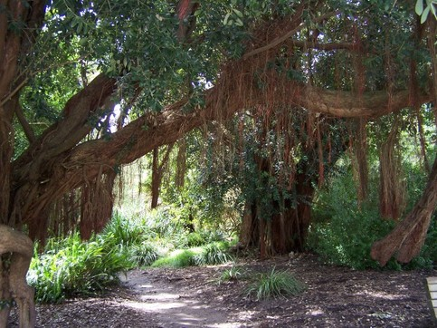 australian-garden.jpg