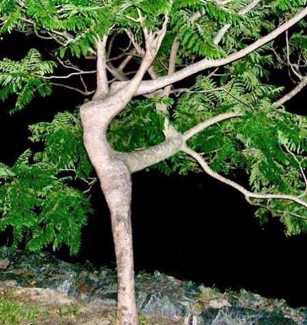 girl-tree.jpg