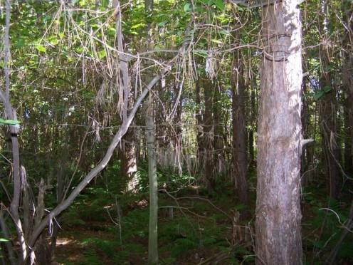 mysterious-woods.jpg