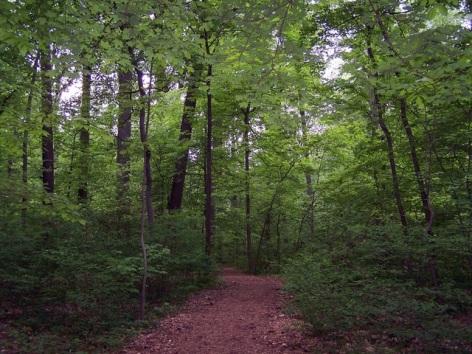 path-thru-the-trees.jpg