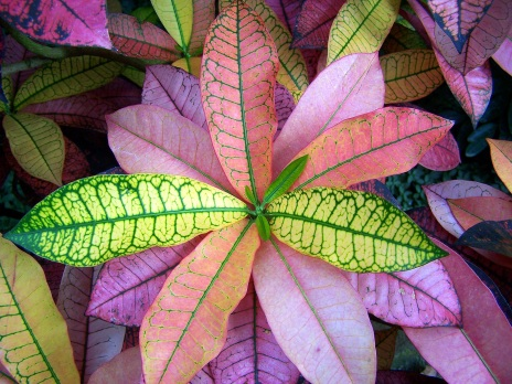pink-and-green-plant.jpg