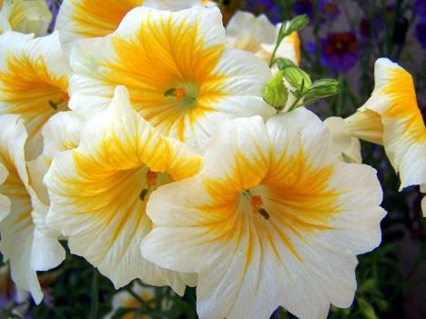 yellow-and-white-flowers.jpg