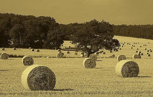 hay-field-2.jpg