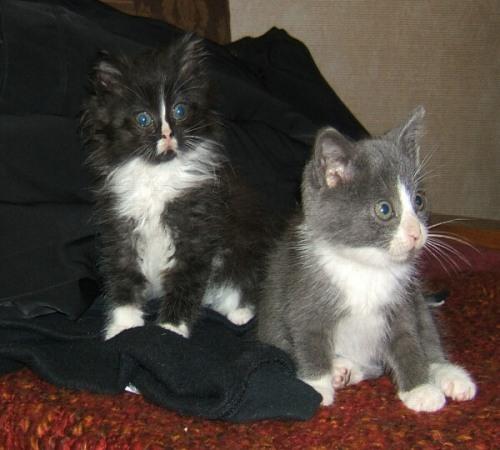 innocent-kittens.jpg