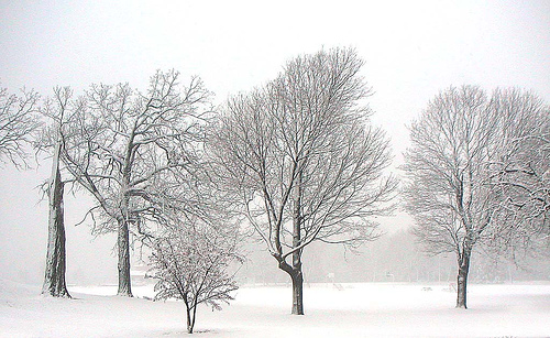 winter-trees.jpg