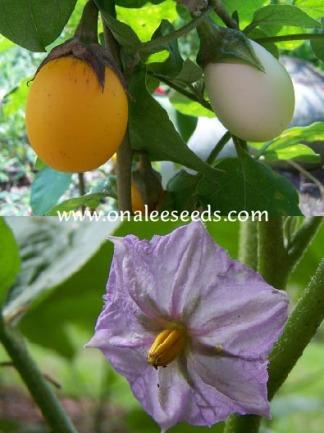 ornamentaleggplant.jpg