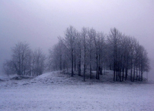 winter-trees-on-hill