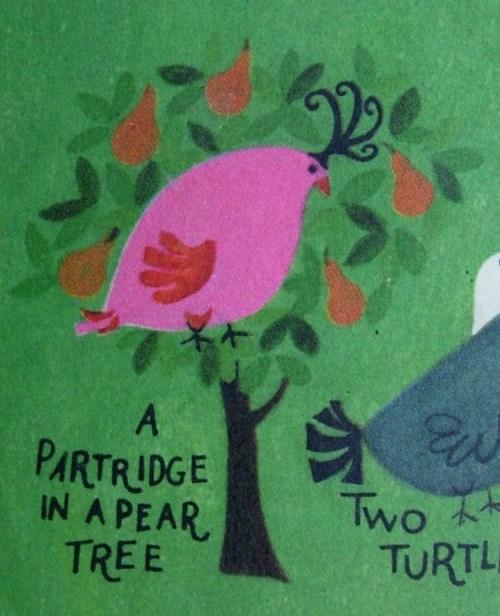 partridge-5