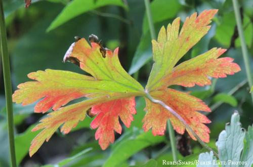 Autumn Harbinger