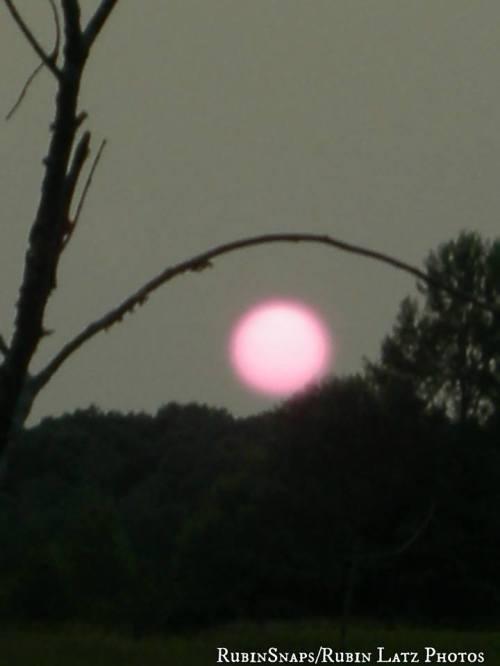 setting pink sun