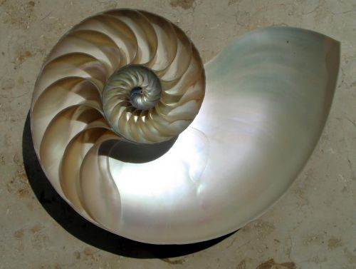 Ghosties Gift - Nautilus Shell